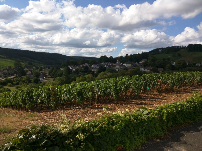 View of the winery from across the vines.