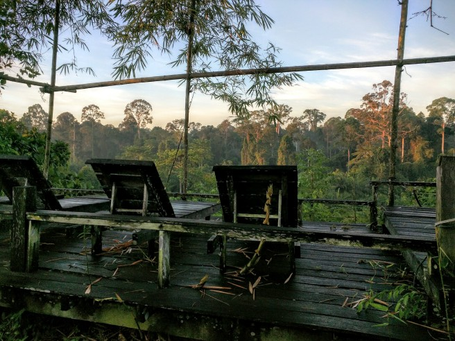 A jungle view from our rainforest chateau